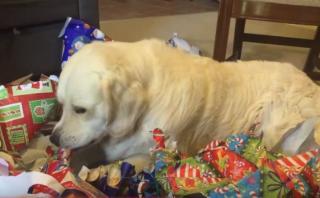 Lo mejor de los regalos es el papel, según un adorable perrito