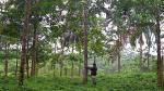 Gobierno emite decreto que promoverá comercio forestal - Noticias de fauna silvestre