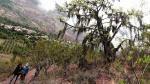 El renacer de la flora y fauna sobre el gasoducto [FOTOS] - Noticias de rio grande academico
