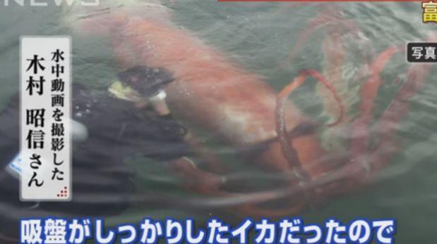Calamar gigante en vivo, pasa papu