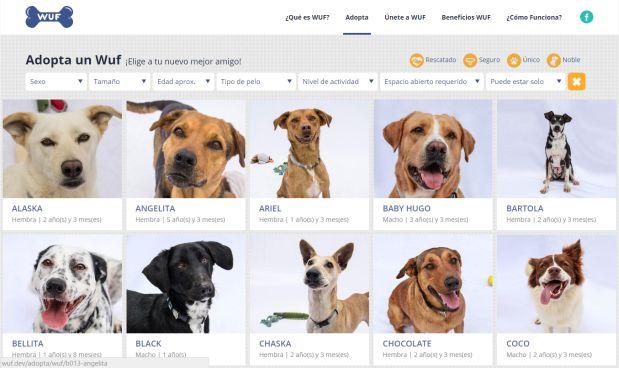 Normalmente la página de adopciones de WUF luce así, con las fotos completas de los perros.