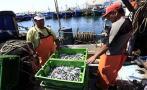 Produce: finalizó la primera temporada de pesca de anchoveta