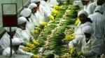 Producción agropecuaria cerraría el año con crecimiento de 2,8% - Noticias de producción pecuaria