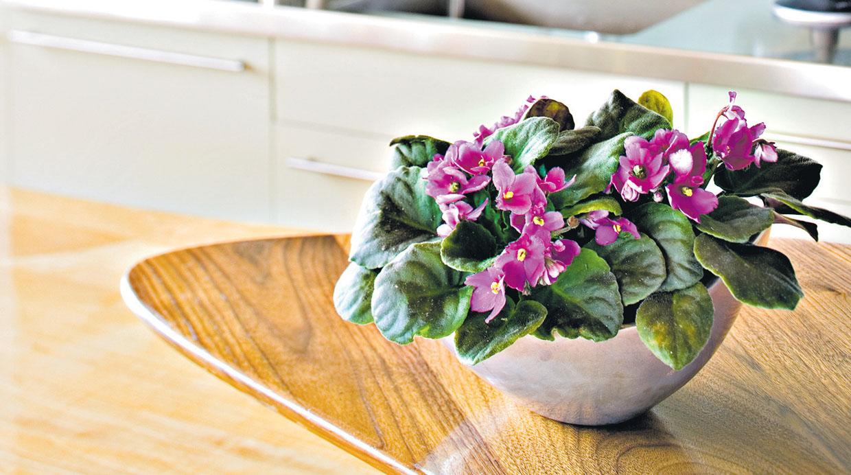 Descubre cu les son las mejores plantas para interiores for Plantas para interiores de casa
