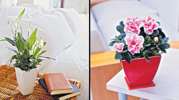 Descubre cu les son las mejores plantas para interiores for Cuales son las plantas para interiores