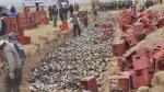 Otra vez municipio de San Román destruye miles de licores - Noticias de serenazgo de puno
