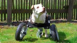 ¿Por qué no hay animales con ruedas?