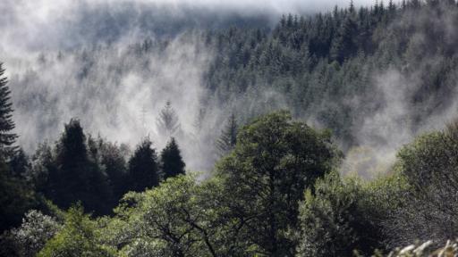 Por sí solo, el calentamiento no explica la extinción masiva de animales y plantas terrestres.