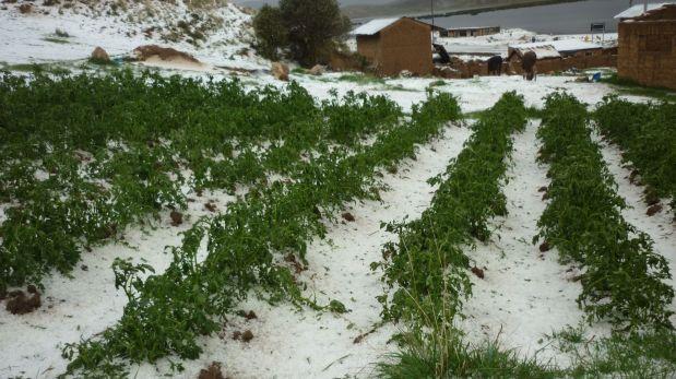 Junín: fuerte granizada destruyó hectáreas de diversos cultivos
