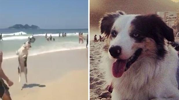 El perro futbolista que muestra su talento en playas [VIDEO]