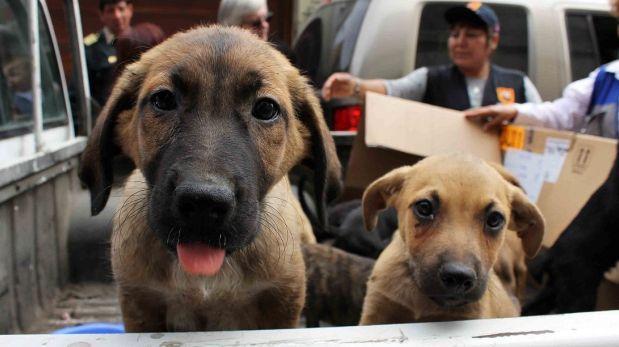 Promulgan ley que envía a la cárcel a maltratadores de animales