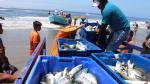 Fenómeno de El Niño favorece la pesca en Lambayeque [FOTOS] - Noticias de jose ocampo