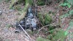 Aokigahara, el bosque suicida de Japón que inspira películas - Noticias de monte fuji