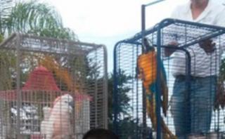 México: Incautan aves exóticas en el rancho de El Chapo Guzmán