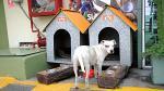 Surco recicla y fabrica casas para perros - Noticias de botellas recicladas