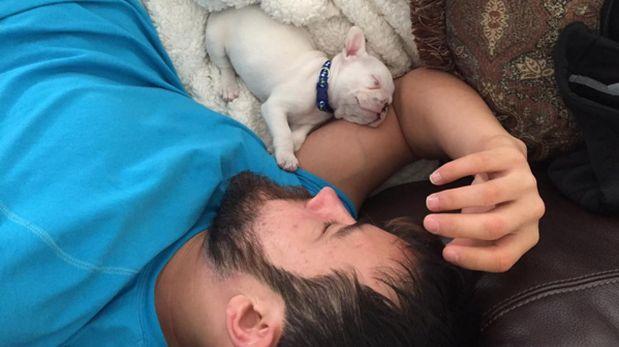 Este bulldog francés se roba así el corazón de su dueño [VIDEO]