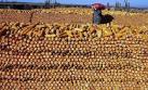 ONU: el cambio climático afecta seguridad alimentaria del mundo