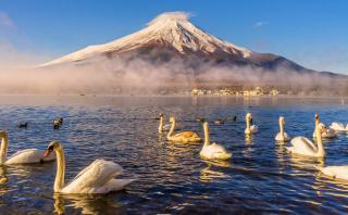 Disfruta de un recorrido por el lago de los cisnes de Japón
