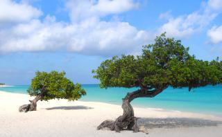 Eagle Beach: la mejor playa de Aruba para realizar tu boda