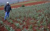 Declaran en emergencia la agricultura en 9 provincias de Junín