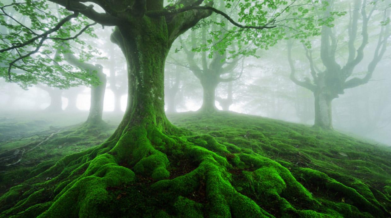Un bosque encantado en el coraz n del pa s vasco foto - El arbol encantado ...