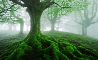 Un bosque encantado en el corazón del País Vasco