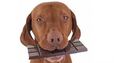 La razón por la que no debes darle chocolate a tu perro [VIDEO]