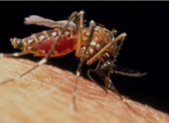 Brasil detecta el virus zika en orina y saliva de pacientes