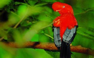 Perú: déjate maravillar por la belleza de sus parques y bosques