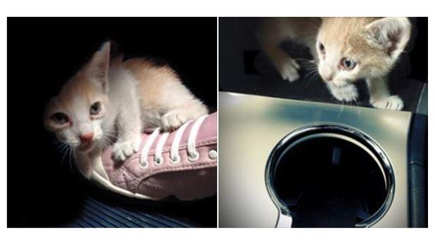 Policía se ganó respeto por salvar a gatita de ser arrollada