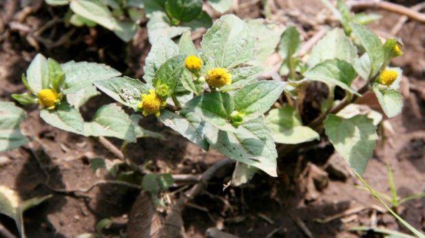 Jard n bot nico del ins re ne m s de 400 plantas for Jardin botanico medicinal
