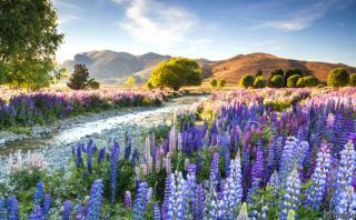 Un paseo fotográfico por los jardines más hermosos del mundo