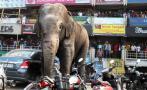 Elefanta salvaje desata pánico en localidad de India [VIDEO]