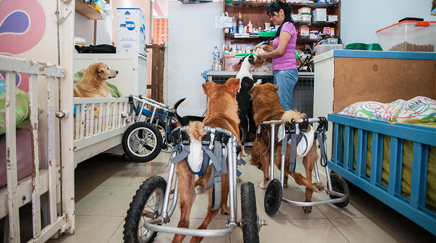 [Foto] Un oasis para perros desvalidos