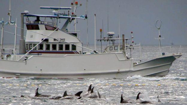 Japón tiene un programa aprobado para caza de ballenas cerca de la costa. (Foto: BBC Mundo)
