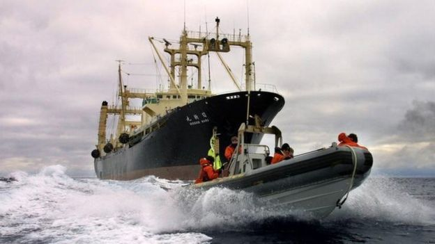 El único buque factoría de Japón es muy viejo y algunos creen que Japón no buscará reemplazarlo. (Foto: BBC Mundo)