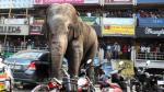 Elefanta salvaje desata pánico en localidad de India [VIDEO] - Noticias de motos