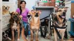 Un oasis para perros desvalidos - Noticias de belen rueda