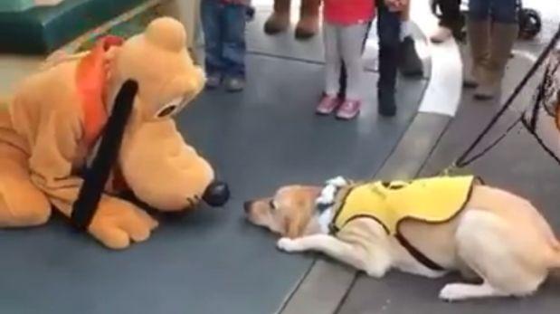 Este perro conoció a Pluto y su reacción es adorable [VIDEO]
