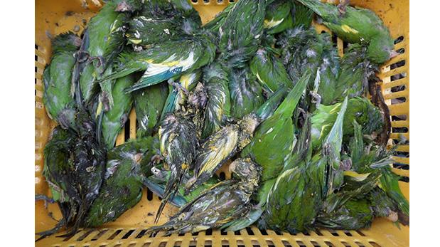 [Foto] Perú es líder en tráfico de fauna silvestre