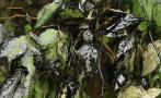 El desastre ambiental en Amazonas por derrames de crudo [FOTOS]