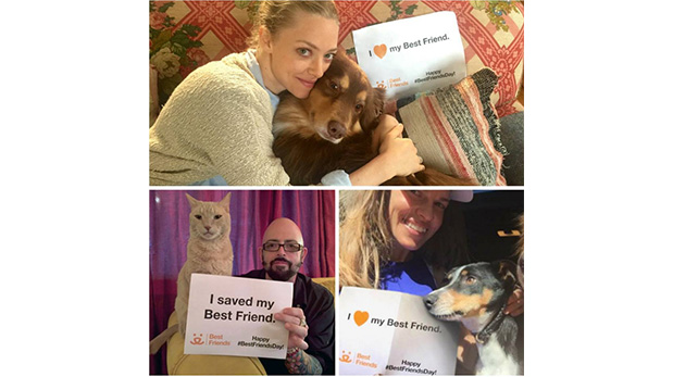 Amanda Seyfried, Jackson Galaxy y Hilary Swank con sus perros en una campaña que apoya al refugio Best Friends.