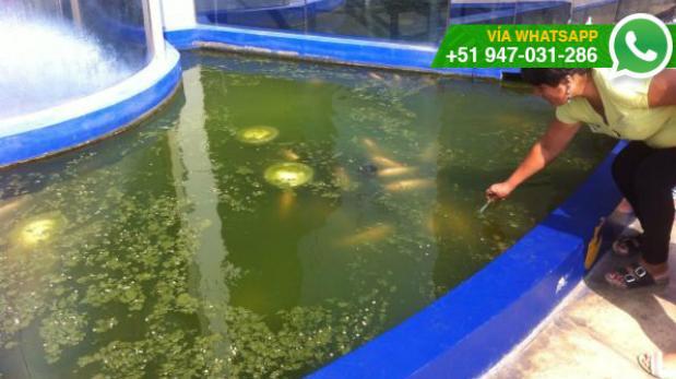 Whatsapp peces de pileta del municipio de sjl viven en for Peces de pileta