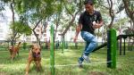 Los perros ganan terreno - Noticias de campaña de vacunación