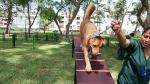 Los perros ganan terreno - Noticias de alfonso bustamante