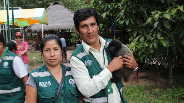 El año pasado, Serfor rescató a 327 animales silvestres, entre los cuales destacan tigrillos, pihuichos, serpientes, loros, tortugas y  monos.(Yulissa Casana / El Comercio)