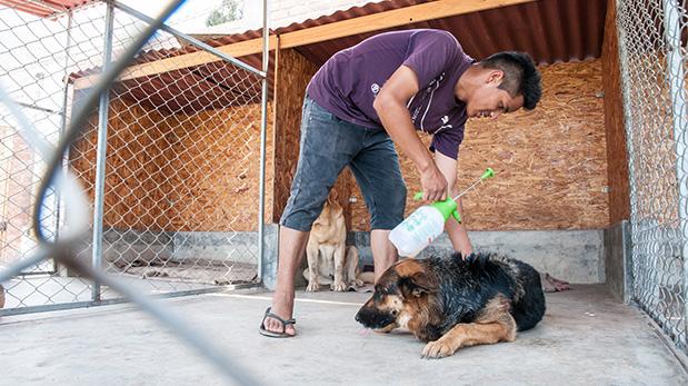 Denis ayuda a Richard con la limpieza, la fumigación y la alimentación.