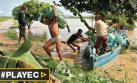 Piura y Tumbes piden ser declaradas en emergencia [VIDEO]