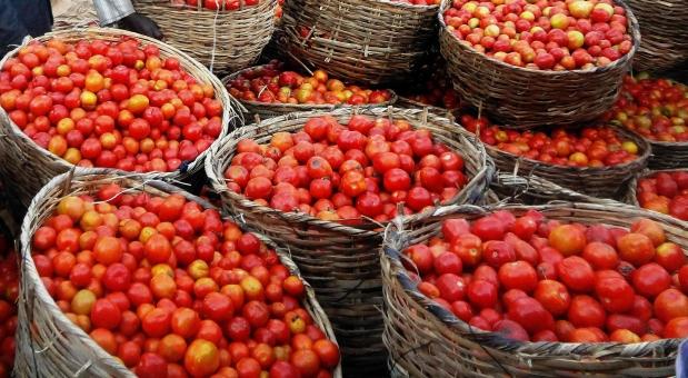 Los 5 vegetales m s f ciles de cultivar en tu casa y qu for Cultivar vegetales en casa