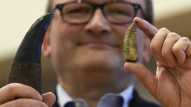 El director del Departamento de Paleobiología del museo Smithsonian sostiene un diente del Timurlengia a la derecha y uno del T-Rex a la izquierda. (Foto: AP)